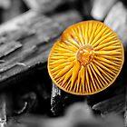 Baby Mushroom by Kate Halpin