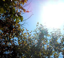 Sun through the Trees by coffeepr1nce