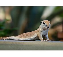 Yoga Ground Squirrel Style  Photographic Print