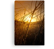 Tangled Up In Sunset Canvas Print