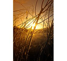 Tangled Up In Sunset Photographic Print