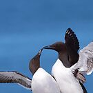 Lovebirds of the Sea by naturalnomad