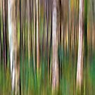 Into the Woods - Digital Art by David Alexander Elder