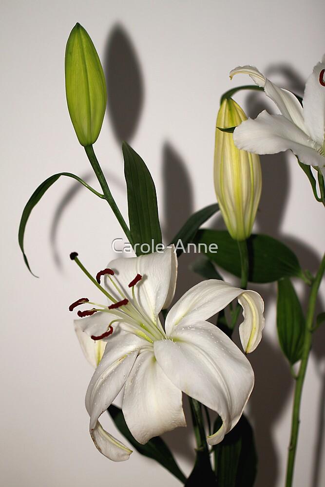 White Lily Spray by Carole-Anne