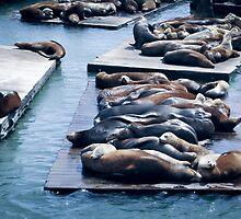 San Francisco Seals by Luke Donegan