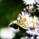 Yellow Butterfly by Luke Donegan