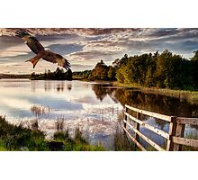Red Kite Flying Photographic Print