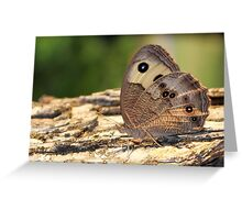 Texas Butterfly - Common Buckeye - Daily Homework - Day 50 - June 26, 2012 Greeting Card