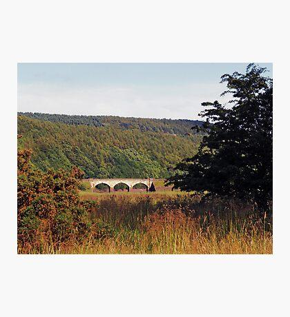 Lindley Wood Photographic Print