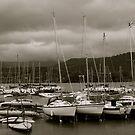 The Marina by Lou Wilson