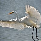 Whizzing By... by Kathy Baccari