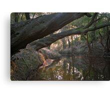 Wolf Creek. Canvas Print