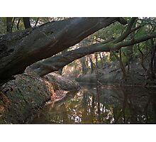 Wolf Creek. Photographic Print