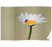 Parchment Daisy and Ladybug Poster