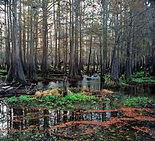 Cypress Swamp at Jane Green Creek #2. by chris kusik