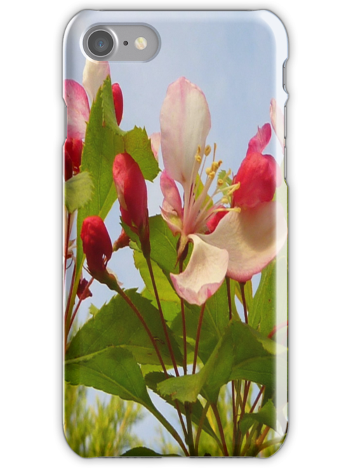 Clematis iPhone Case by Fara