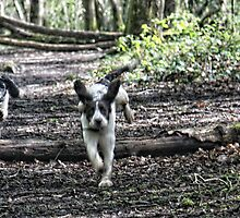 Benson chasing Jess in woods by Paul Morris