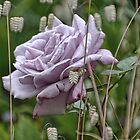 Lilac Rose With Shivering Grass by lynn carter