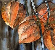 Chinese Lanterns / Physalis by Tania Richard