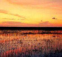 Sunset. East Lake Toho. by chris kusik