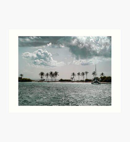 Coconut Palm Trees in Salt Wistle Bay Art Print