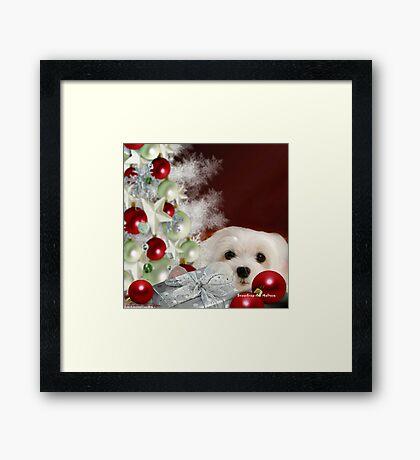 Snowdrop the Maltese at Christmas Framed Print