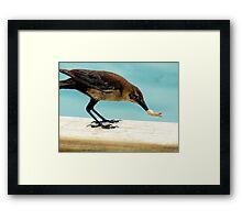 Shrimp Thief  Framed Print