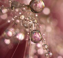 Raspberry Dandy Sparkles by Sharon Johnstone