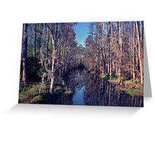 Cypress Tunnel. Shingle Creek. Greeting Card