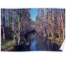 Cypress Tunnel. Shingle Creek. Poster