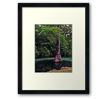 Ponce de Leon Spring. Holmes County. Framed Print