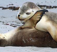 Playful young sea-lion siblings! by jozi1
