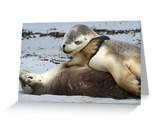 Playful young sea-lion siblings! Greeting Card