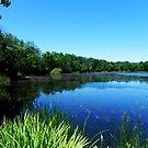 Scout Lake © by Dawn Becker