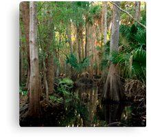Bull Creek Swamp #2. Canvas Print