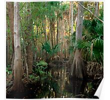 Bull Creek Swamp #2. Poster