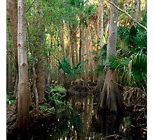 Bull Creek Swamp #2. Photographic Print