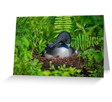 Loon Haven Greeting Card