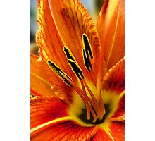 burnt orange Photographic Print
