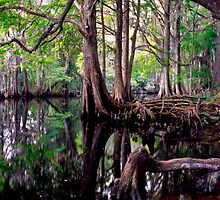 Shingle Creek #2. by chris kusik