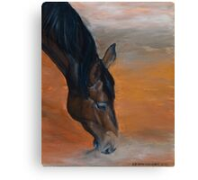 Horse - Lily Canvas Print