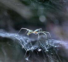 Along Came A Spider by Wviolet28