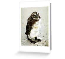 Baby South African Penguin Moulting Greeting Card