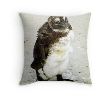 Baby South African Penguin Moulting Throw Pillow