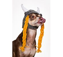 Viking the Dog Photographic Print