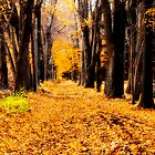 Wooded Path by Lee roberts