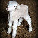 Adventuring Lamb by Emma-Louise Bussey