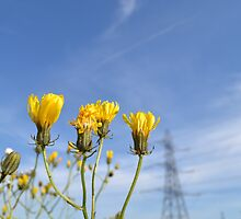 Yellow Flowers by David Griffin