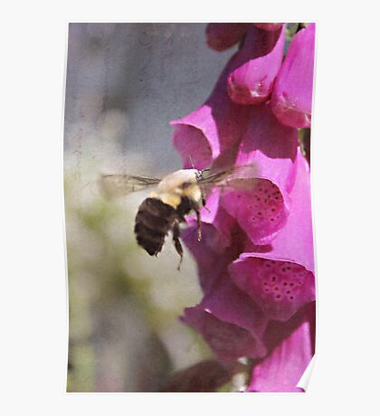 Mr Bumble And The Fox Glove Poster