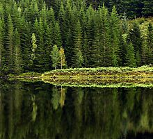 Reflections on Nature by Jill Fisher
